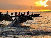 tempat wisata bali destinasi populer pantai terbaik lovina singaraja lokasi tujuan arah traveling liburan backpacker pemandangan alam menarik