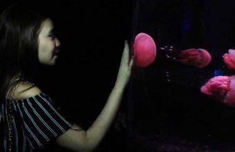 wahana permainan terbaru taman impian jaya ancol seaworld ikan jelly fish ubur-ubur bagus berapa harga tiket masuk htm liburan jam buka atraksi tempat wisata