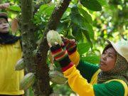 Mondelez International melaksanakan program Cocoa Life untuk memberdayakan petani kakao