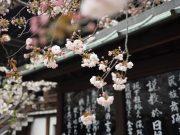 Beasiwa Pemerintah Jepang dari Monbukagakusho/ MEXT bagi siswa Indonesia untuk belajar gratis